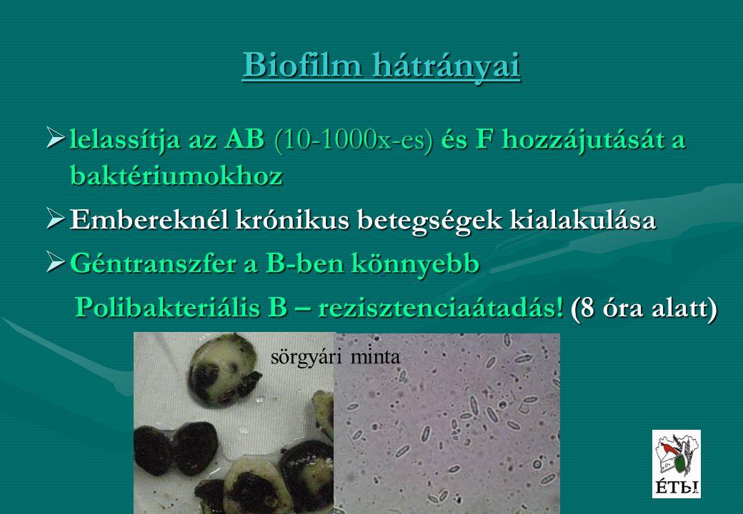 Biofilm hátrányai lelassítja az AB (10-1000x-es) és F hozzájutását a baktériumokhoz. Embereknél krónikus betegségek kialakulása.