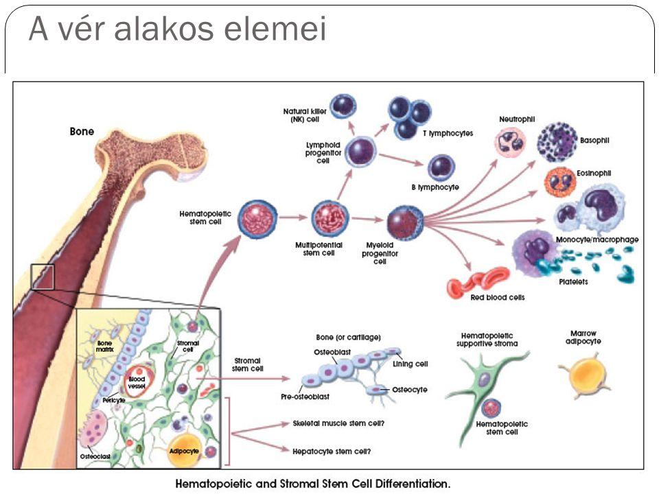 A vér alakos elemei