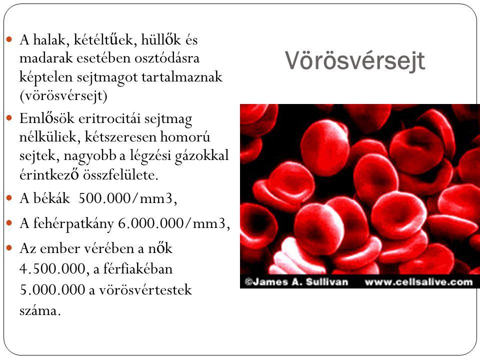 Vörösvérsejt A halak, kétéltűek, hüllők és madarak esetében osztódásra képtelen sejtmagot tartalmaznak (vörösvérsejt)