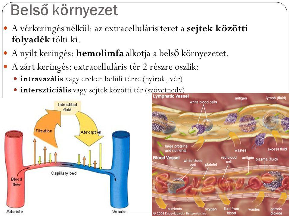 Belső környezet A vérkeringés nélkül: az extracelluláris teret a sejtek közötti folyadék tölti ki.