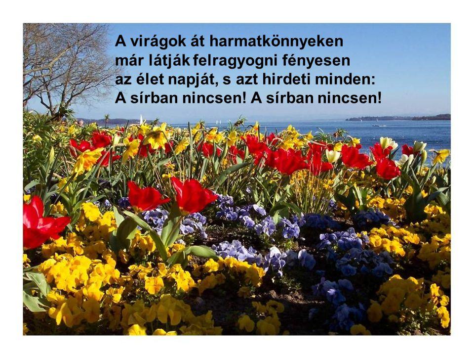 A virágok át harmatkönnyeken már látják felragyogni fényesen az élet napját, s azt hirdeti minden: A sírban nincsen.