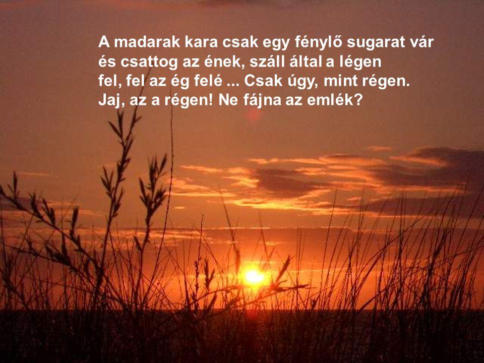 A madarak kara csak egy fénylő sugarat vár és csattog az ének, száll által a légen fel, fel az ég felé ...