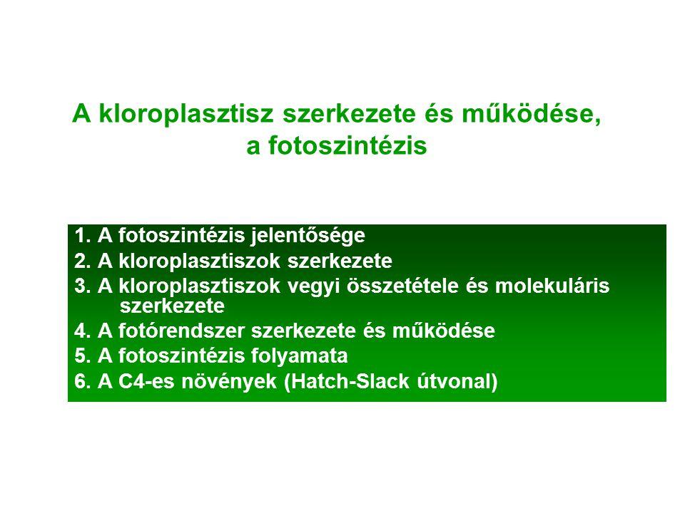 A kloroplasztisz szerkezete és működése, a fotoszintézis
