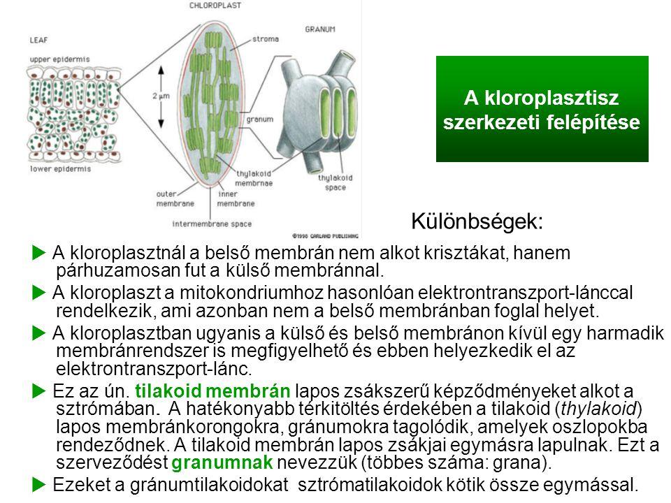 A kloroplasztisz szerkezeti felépítése