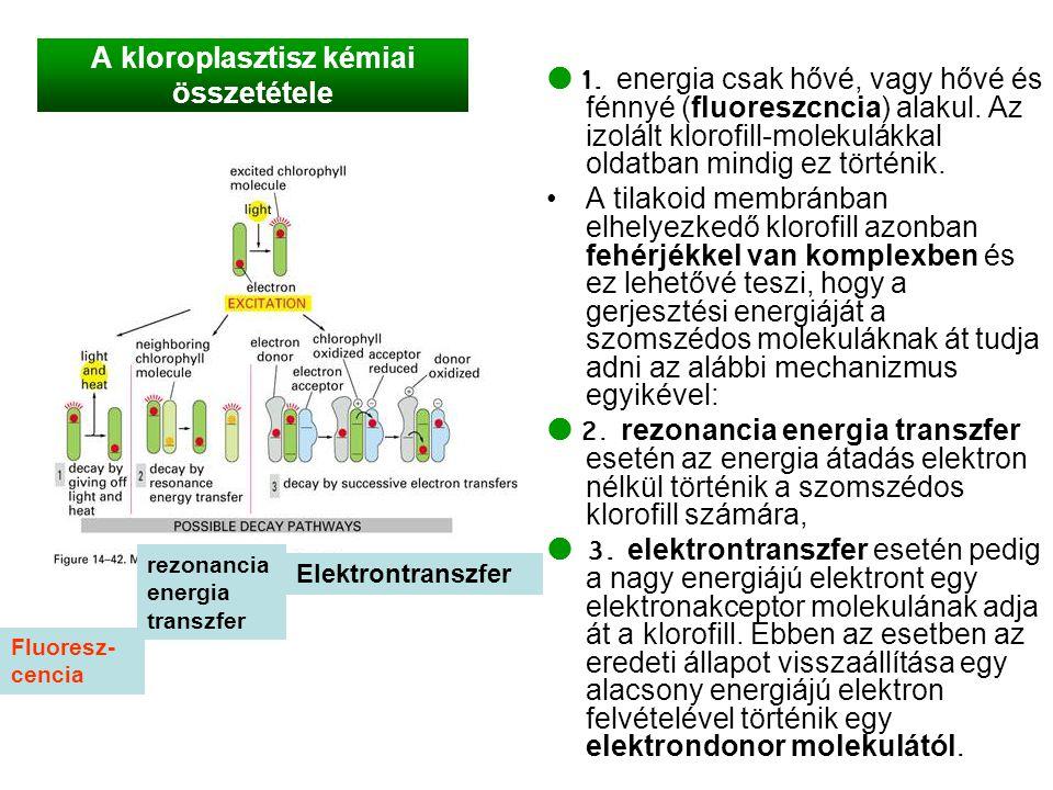 A kloroplasztisz kémiai összetétele