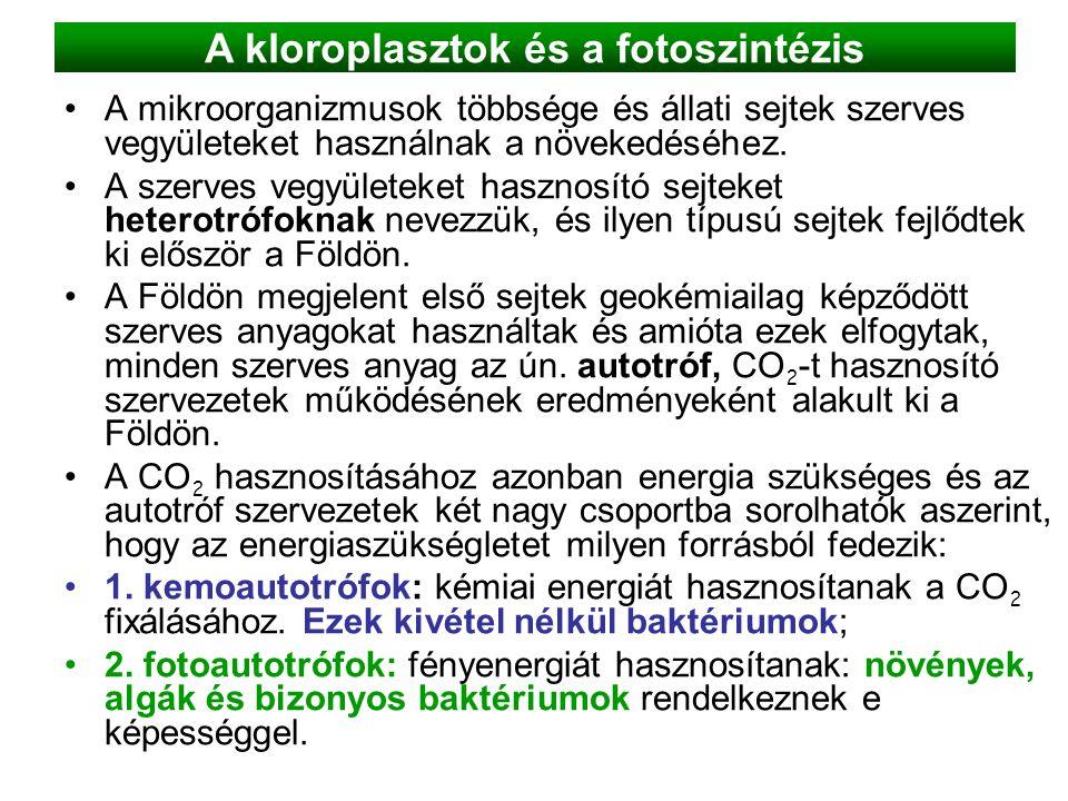 A kloroplasztok és a fotoszintézis