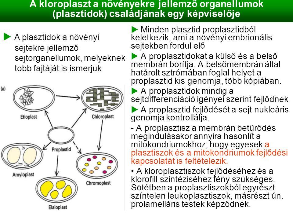 A kloroplaszt a növényekre jellemző organellumok (plasztidok) családjának egy képviselője
