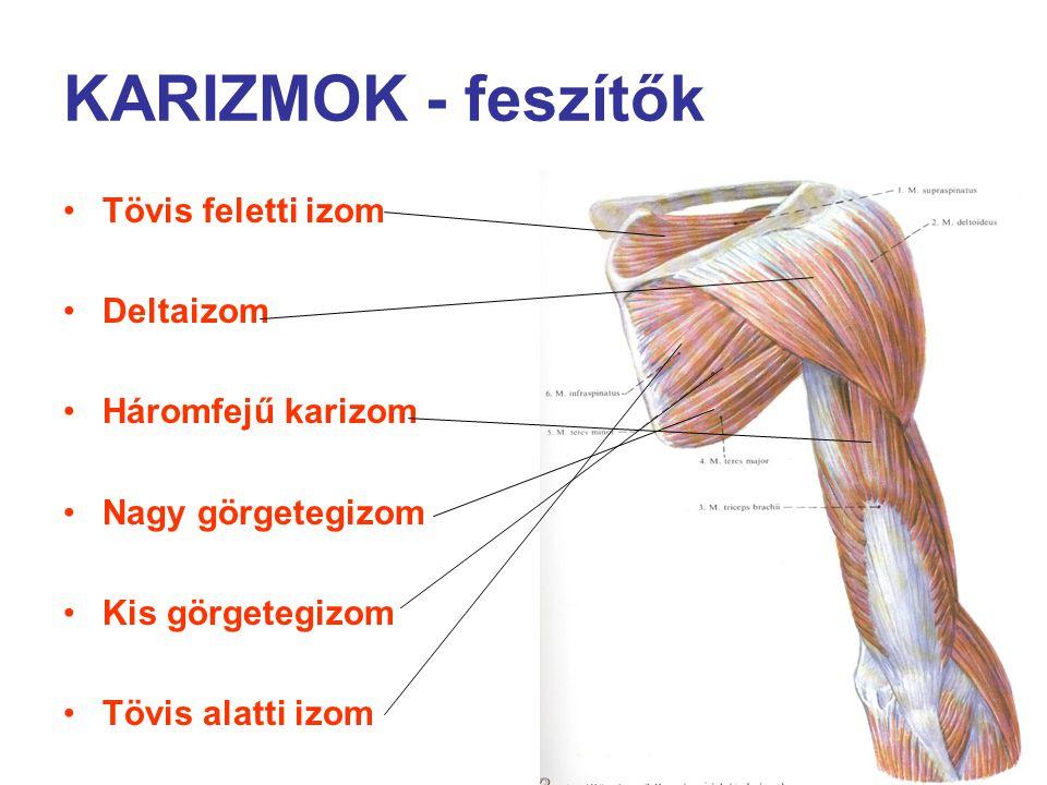 KARIZMOK - feszítők Tövis feletti izom Deltaizom Háromfejű karizom