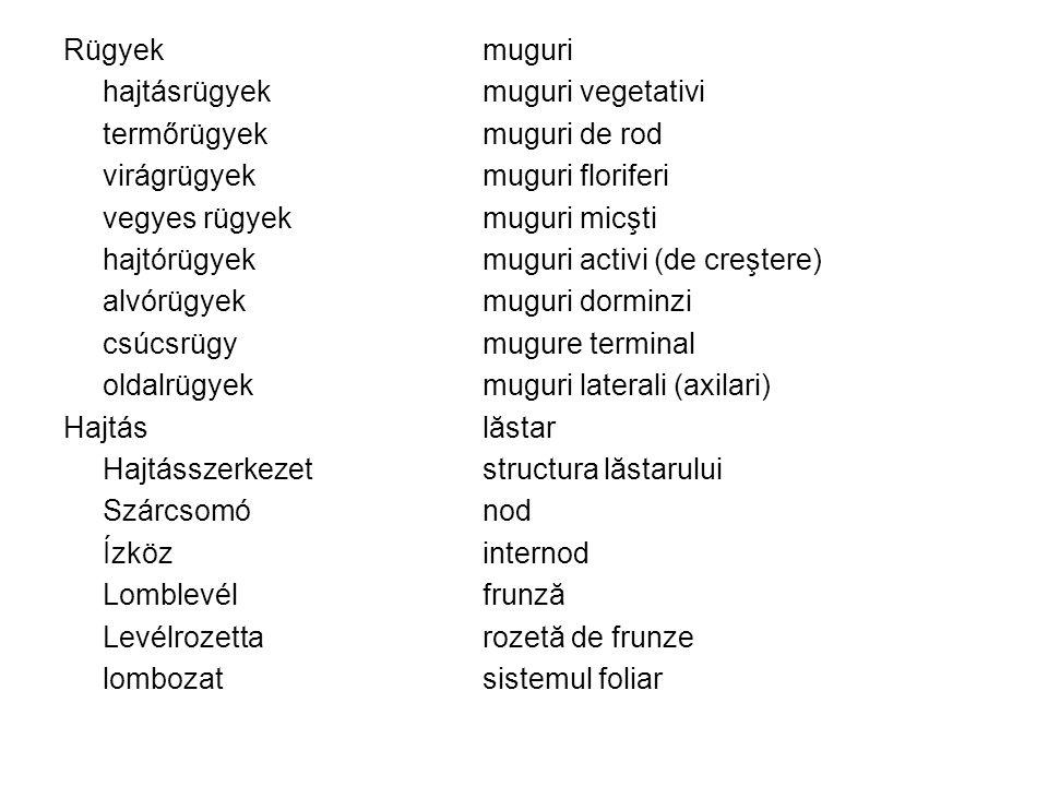 Rügyek muguri hajtásrügyek muguri vegetativi. termőrügyek muguri de rod. virágrügyek muguri floriferi.