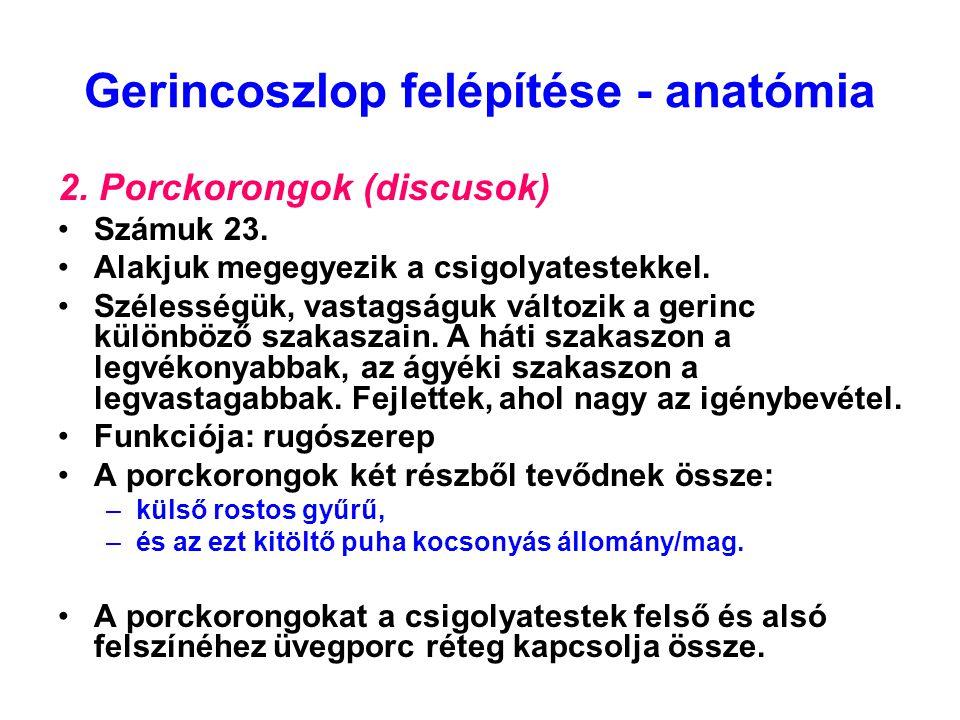 Gerincoszlop felépítése - anatómia