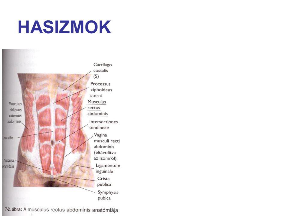 HASIZMOK