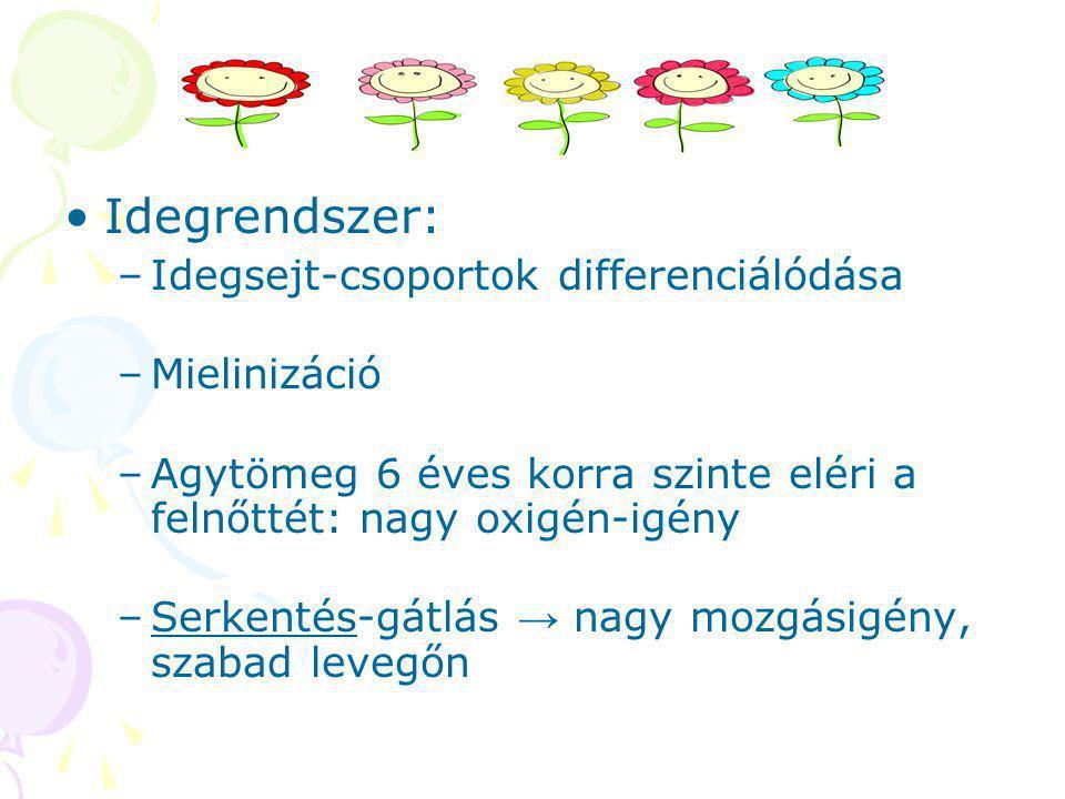 Idegrendszer: Idegsejt-csoportok differenciálódása Mielinizáció