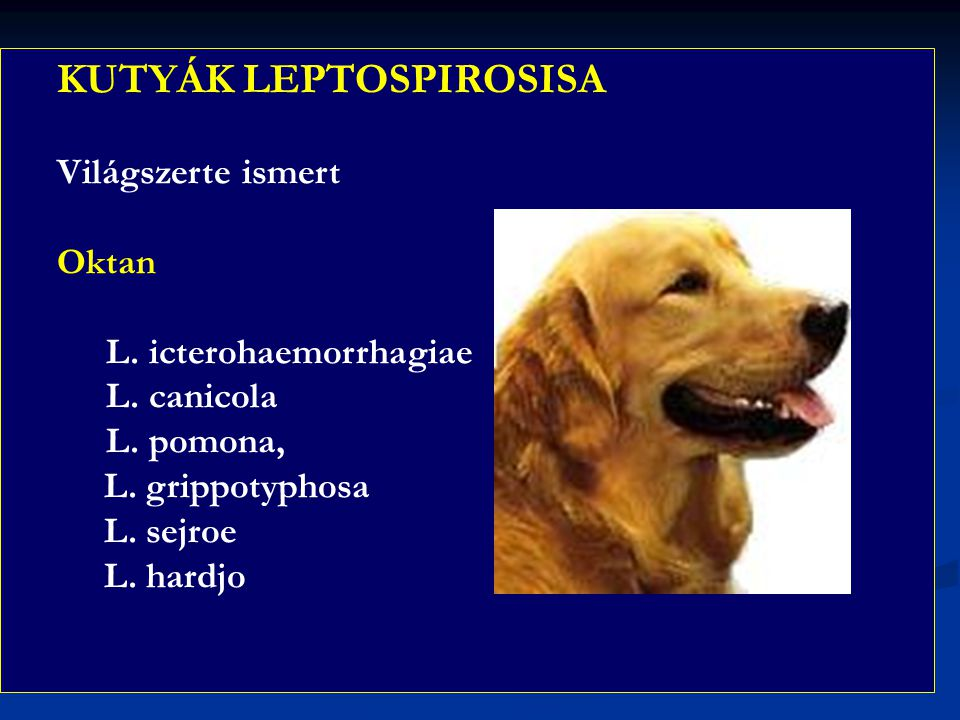 KUTYÁK LEPTOSPIROSISA