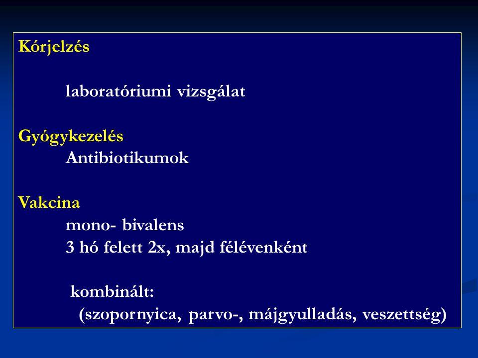 Kórjelzés laboratóriumi vizsgálat. Gyógykezelés. Antibiotikumok. Vakcina. mono- bivalens. 3 hó felett 2x, majd félévenként.