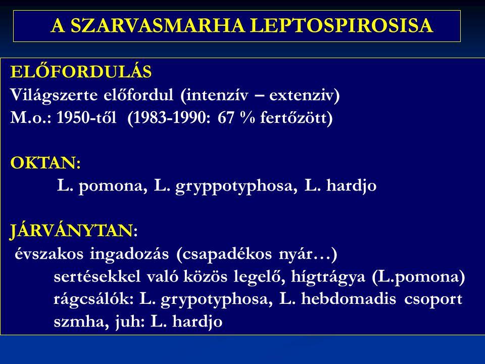 A SZARVASMARHA LEPTOSPIROSISA