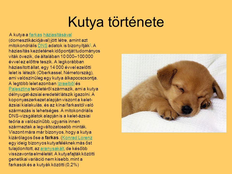 Kutya története