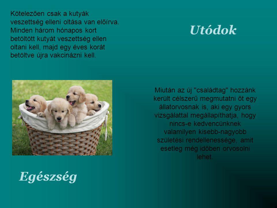 Kötelezően csak a kutyák veszettség elleni oltása van előírva