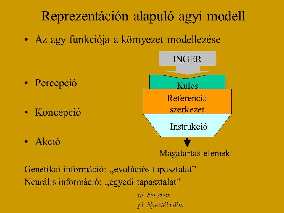 Reprezentáción alapuló agyi modell