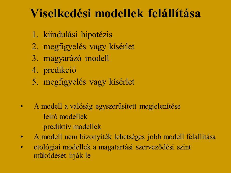 Viselkedési modellek felállítása