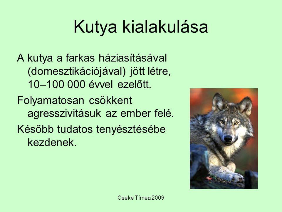 Kutya kialakulása A kutya a farkas háziasításával (domesztikációjával) jött létre, 10–100 000 évvel ezelőtt.