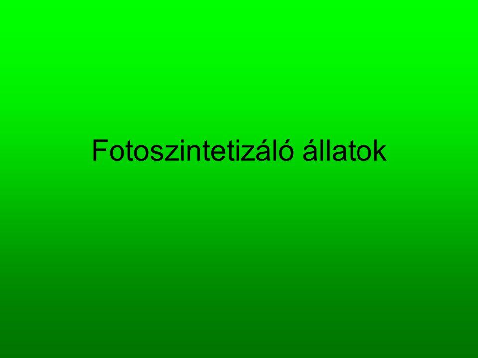 Fotoszintetizáló állatok