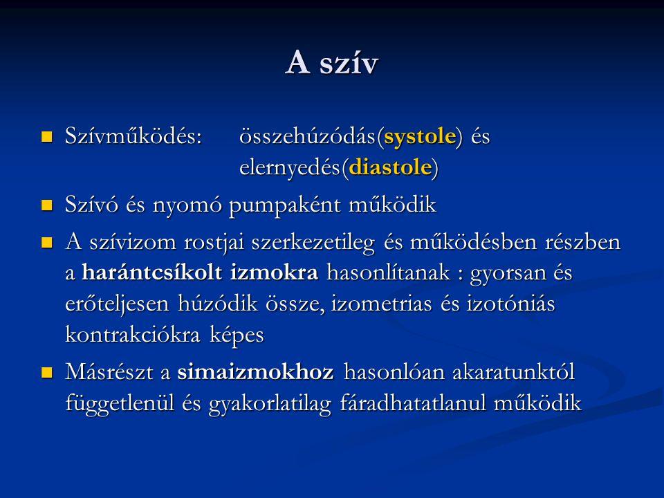 A szív Szívműködés: összehúzódás(systole) és elernyedés(diastole)