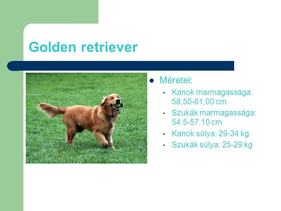 Golden retriever Méretei: Kanok marmagassága: 58,50-61,00 cm