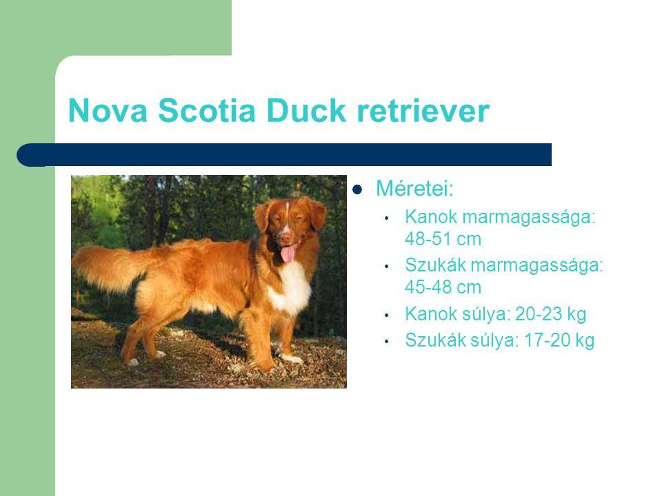 Nova Scotia Duck retriever