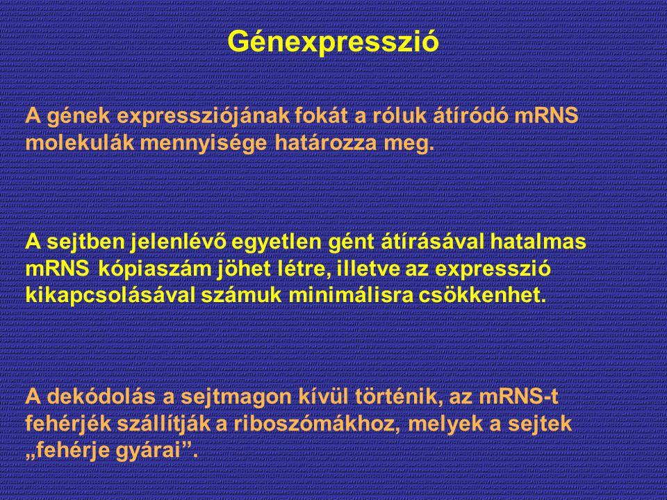 Génexpresszió A gének expressziójának fokát a róluk átíródó mRNS molekulák mennyisége határozza meg.