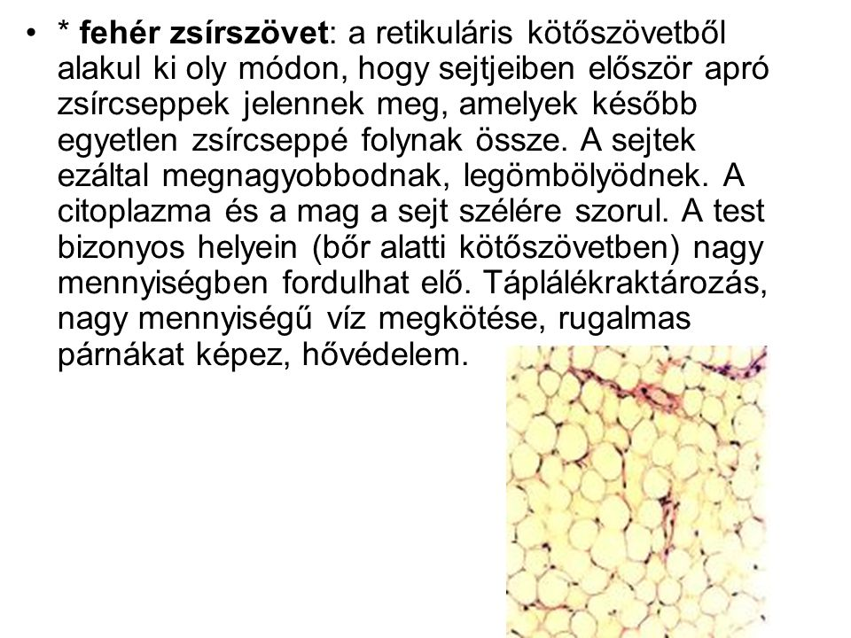 * fehér zsírszövet: a retikuláris kötőszövetből alakul ki oly módon, hogy sejtjeiben először apró zsírcseppek jelennek meg, amelyek később egyetlen zsírcseppé folynak össze.
