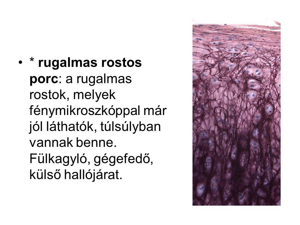 * rugalmas rostos porc: a rugalmas rostok, melyek fénymikroszkóppal már jól láthatók, túlsúlyban vannak benne.