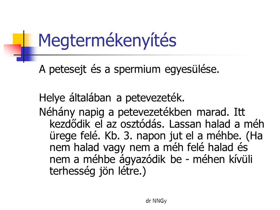 Megtermékenyítés A petesejt és a spermium egyesülése.
