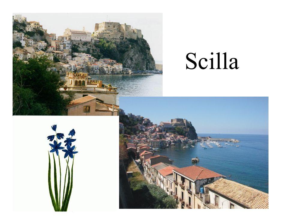 Scilla
