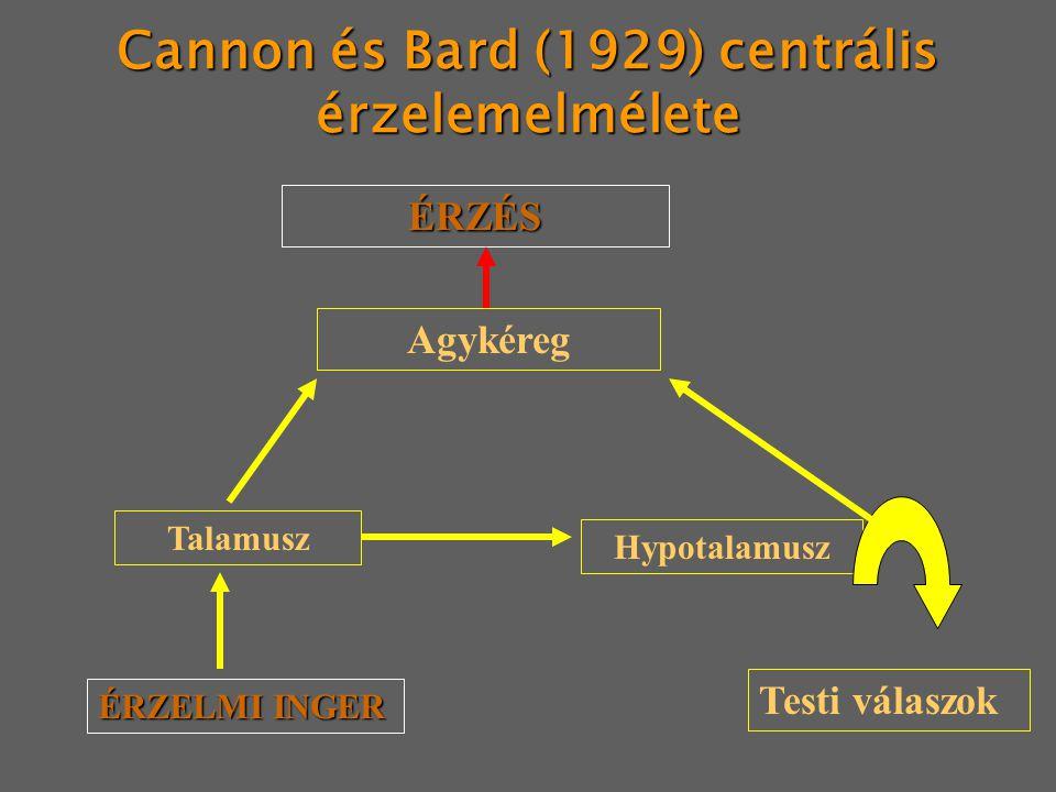 Cannon és Bard (1929) centrális érzelemelmélete