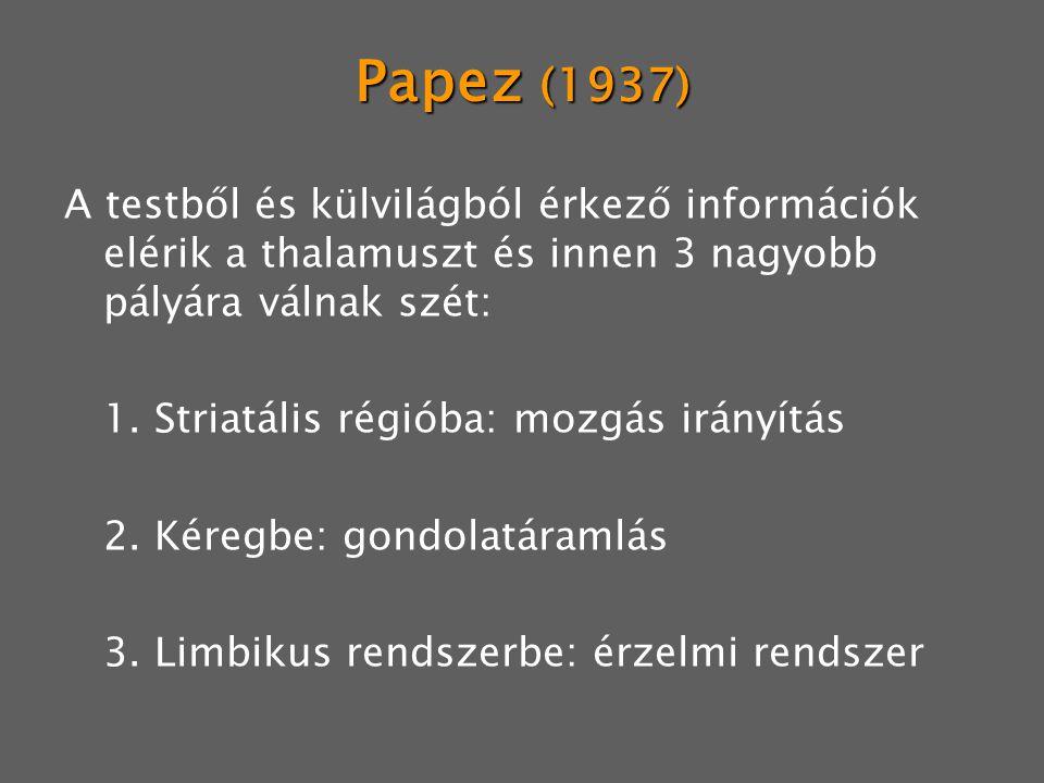 Papez (1937) A testből és külvilágból érkező információk elérik a thalamuszt és innen 3 nagyobb pályára válnak szét: