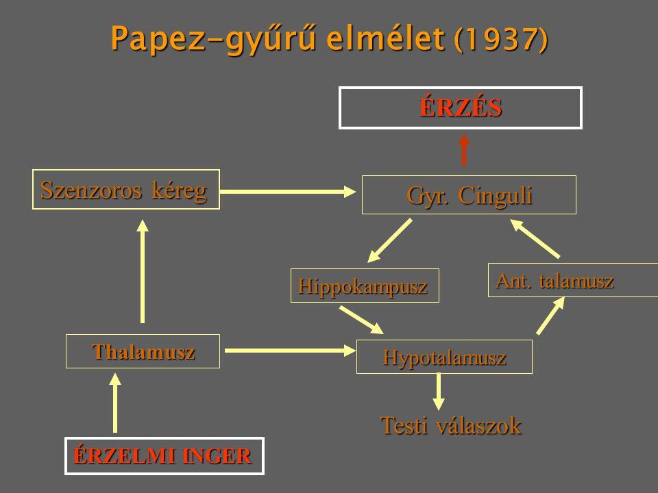 Papez-gyűrű elmélet (1937)