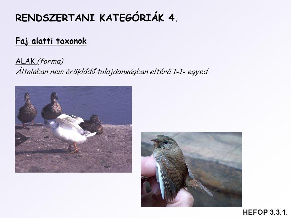 RENDSZERTANI KATEGÓRIÁK 4.