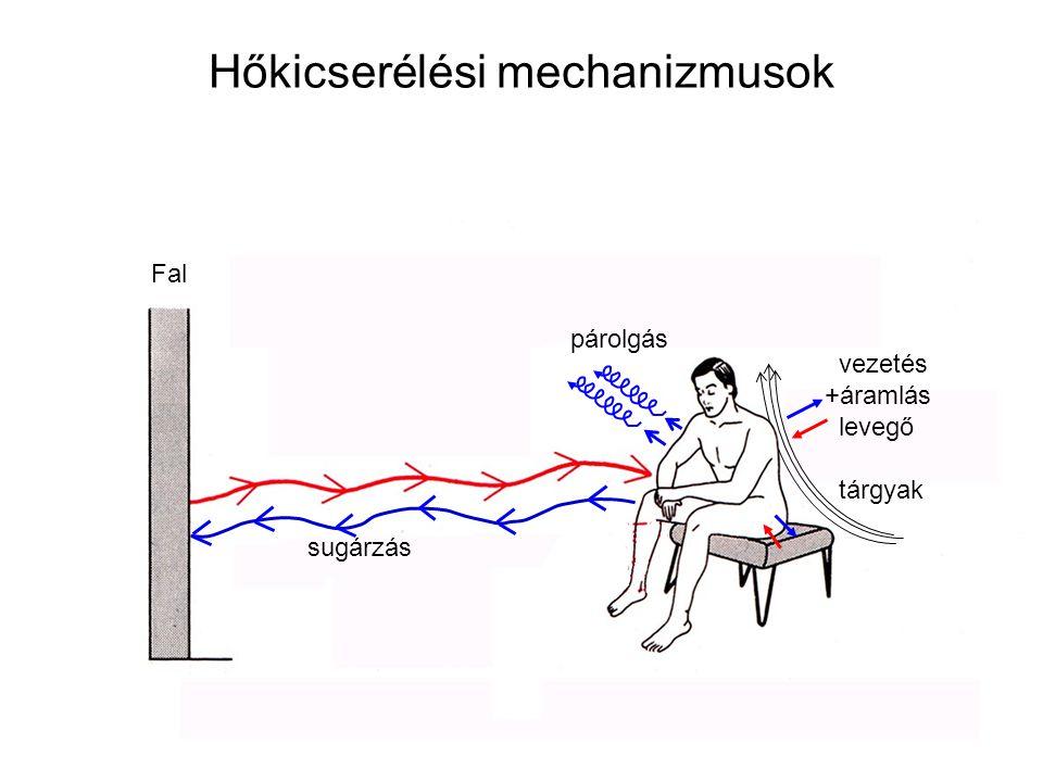 Hőkicserélési mechanizmusok