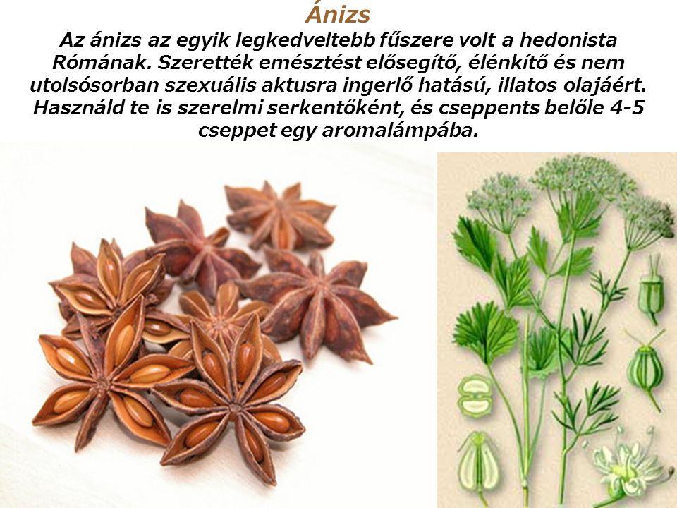Ánizs