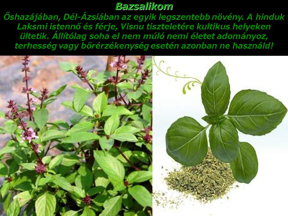 Bazsalikom