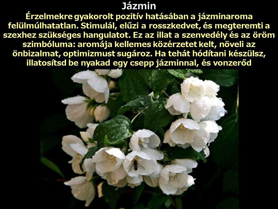 Jázmin