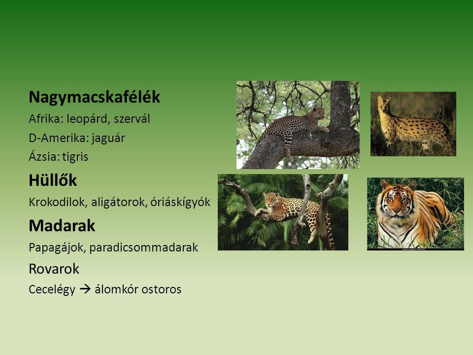 Nagymacskafélék Hüllők Madarak Rovarok Afrika: leopárd, szervál