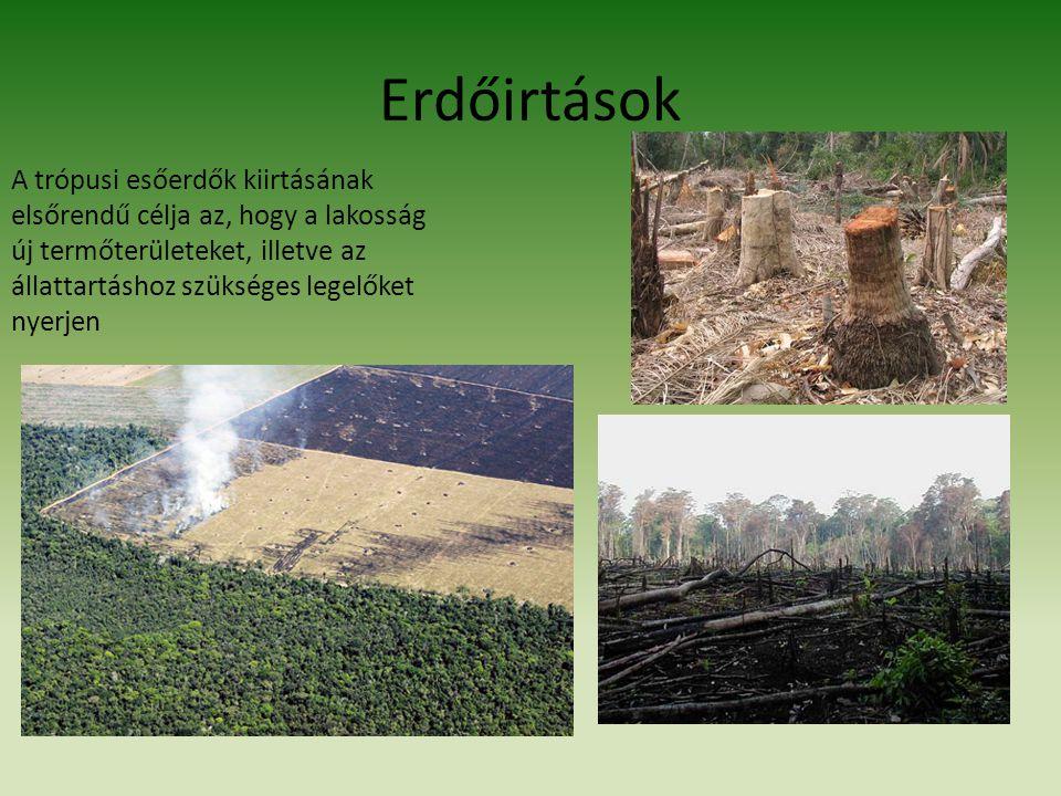 Erdőirtások