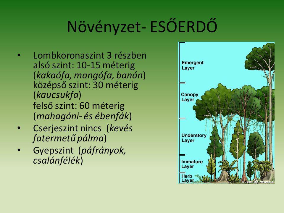 Növényzet- ESŐERDŐ