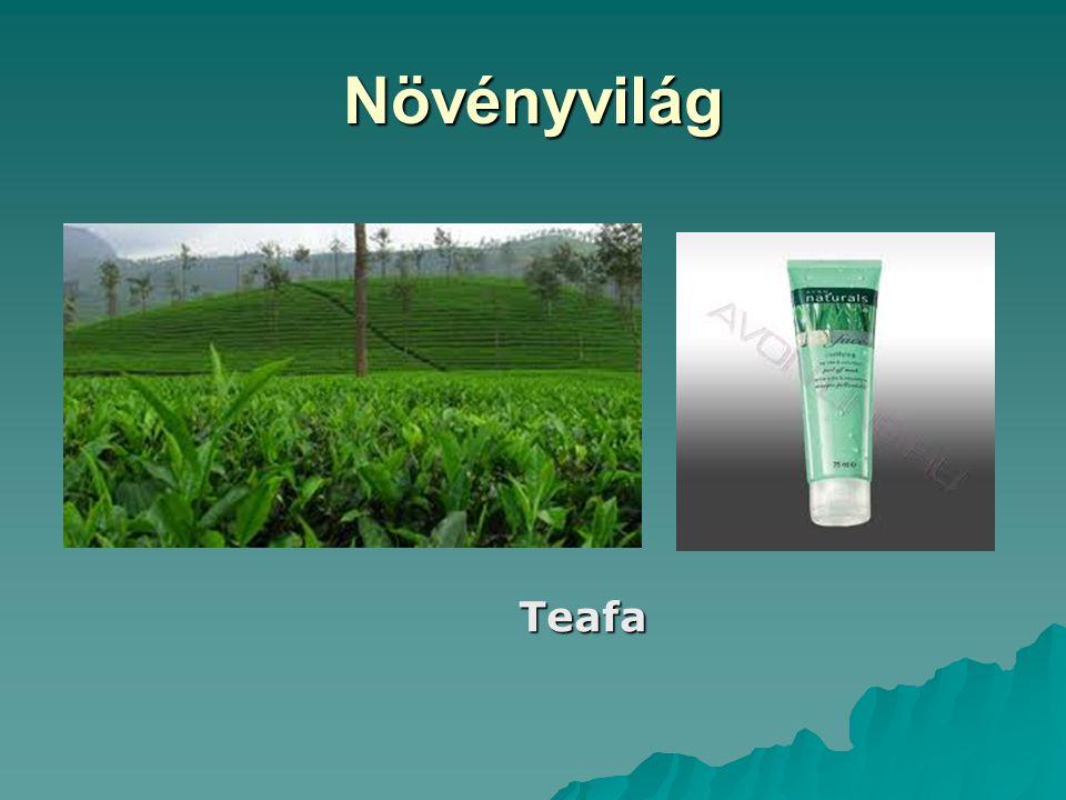 Növényvilág Teafa