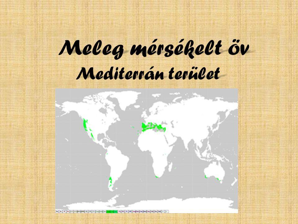 Meleg mérsékelt öv Mediterrán terület