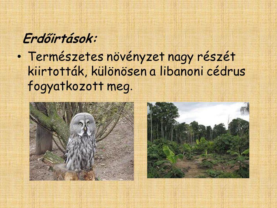 Erdőirtások: Természetes növényzet nagy részét kiirtották, különösen a libanoni cédrus fogyatkozott meg.