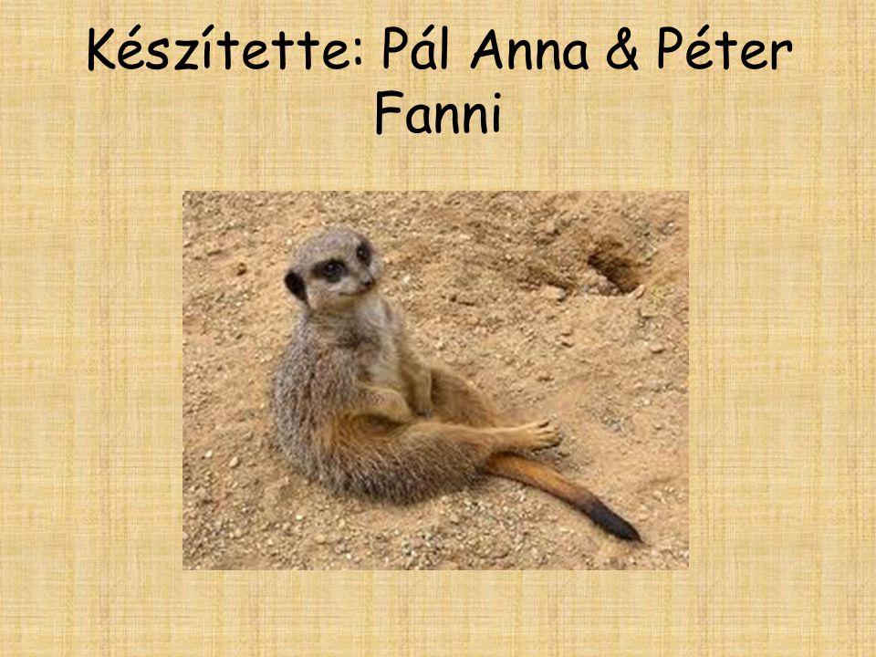 Készítette: Pál Anna & Péter Fanni