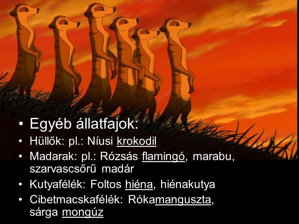 Egyéb állatfajok: Hüllők: pl.: Níusi krokodil