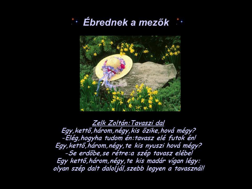 Zelk Zoltán:Tavaszi dal